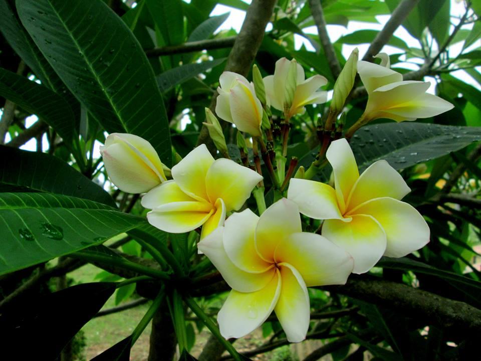 6 loại hoa tuyệt đối không được đặt trên bàn thờ ngày Tết
